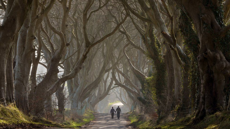 A couple walk hand-in-hand along the Dark Hedges