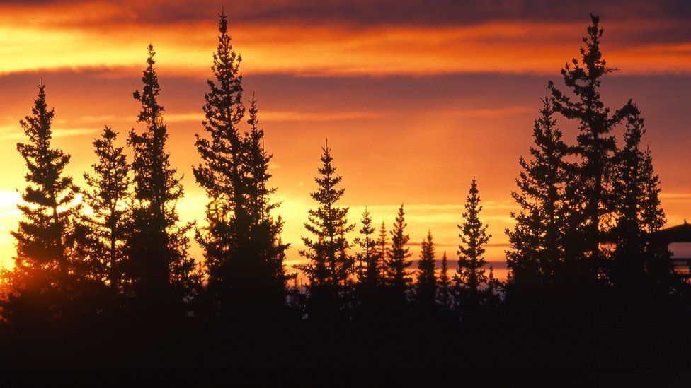 Manitoba's boreal forest at dawn