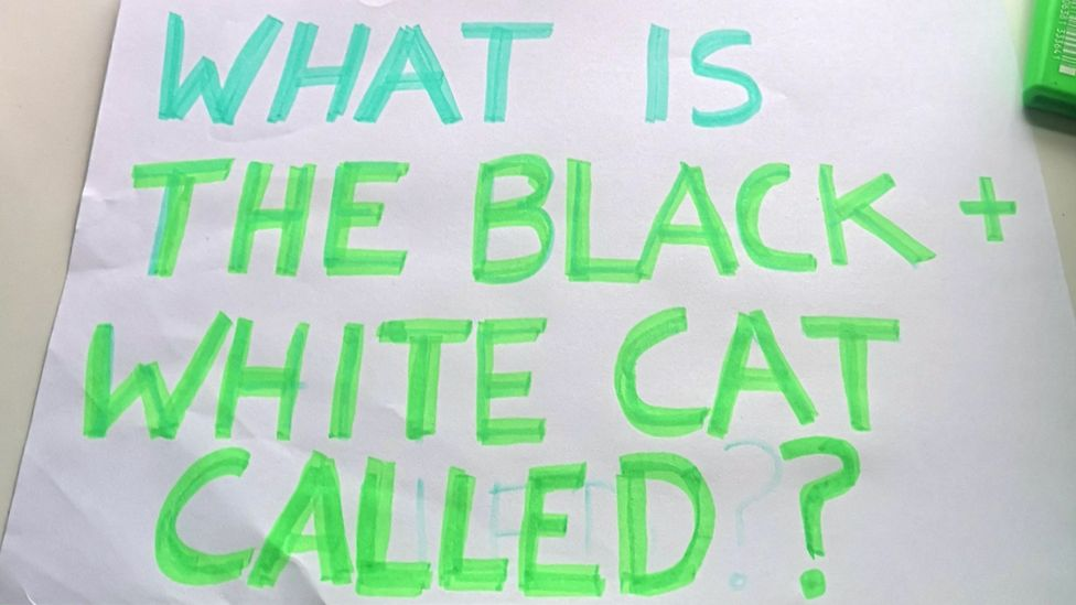 """A sign saying """"what is the black and white cat called?"""""""