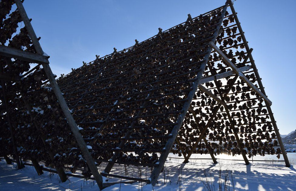 The A-frames upon which stockfish are hung to dry