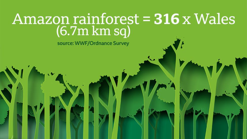 Graphic - Amazon rainforest is 6.7m km sq, equivalent to an area the size of 316xWales