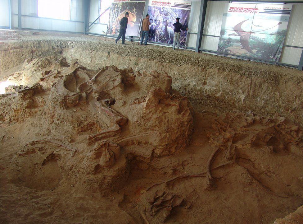 An excavation site with dinosaur fossils exposed in the soil