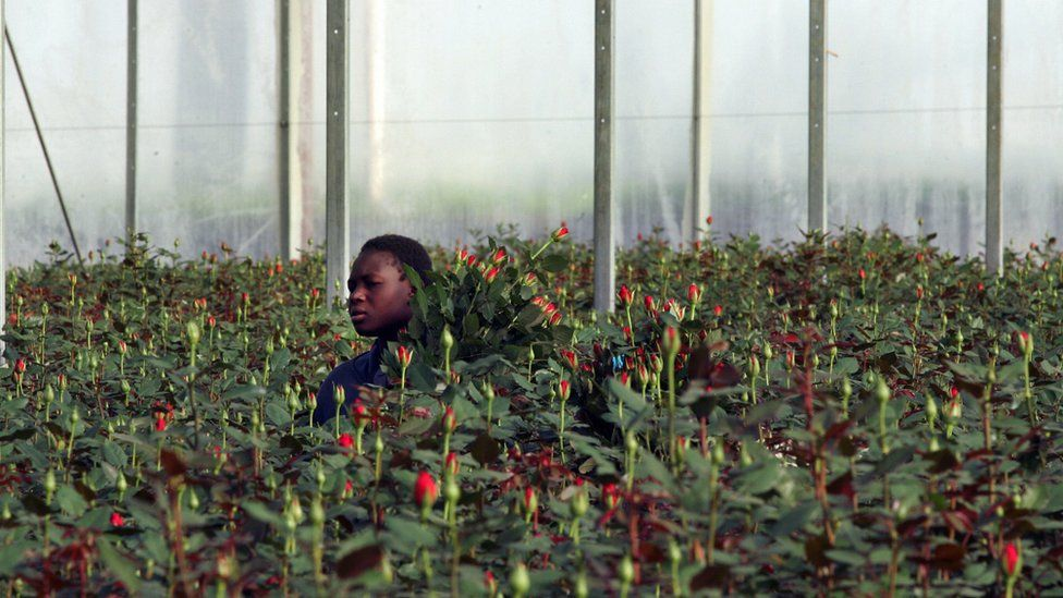 Man collecting flowers in a greenhouse