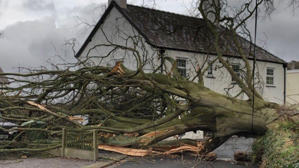 Bontnewydd tree down