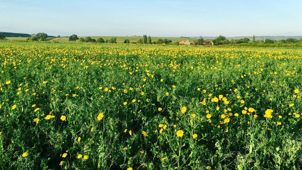 Wildflowers in the fields and alongside the Marlbrook chalk stream, Cuxham