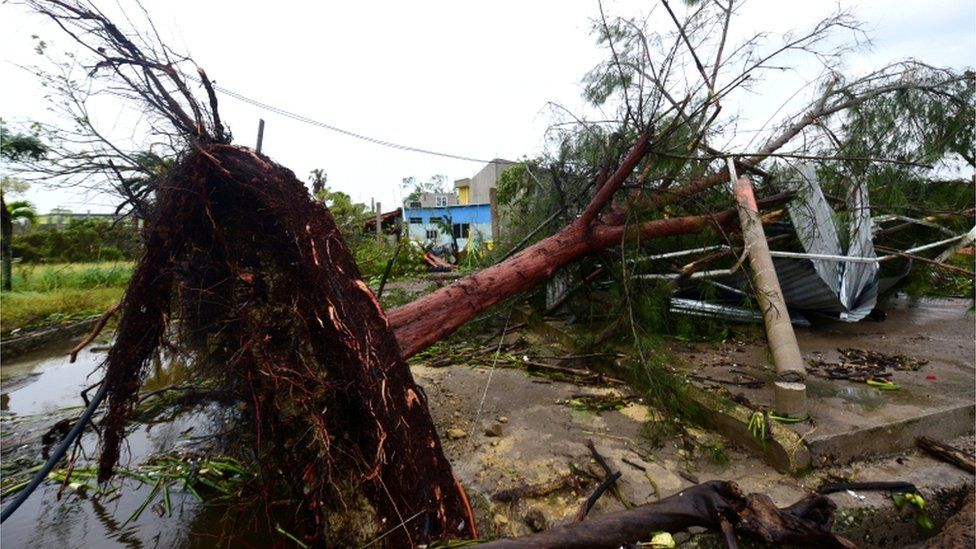 A tree, uprooted when Hurricane Grace slammed into the coast with torrential rains, fell on a house, in Tecolutla, Mexico, 21 August 2021