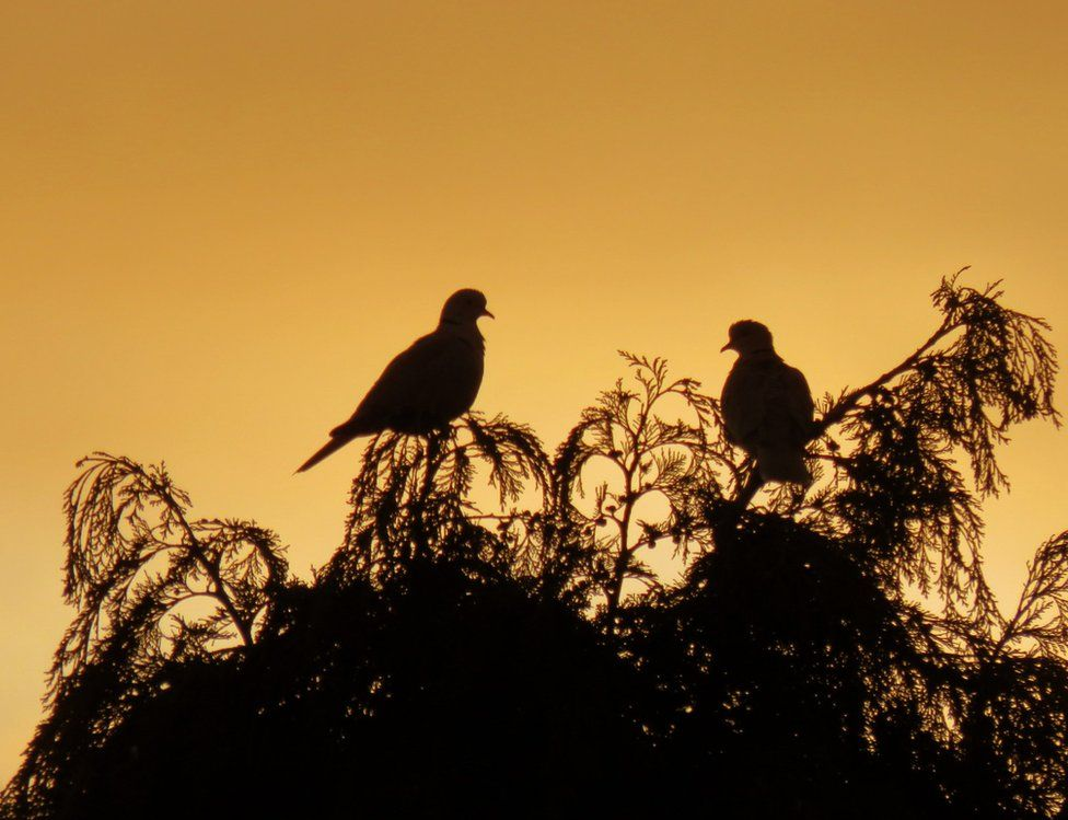 Silhouette of two birds standing on branches