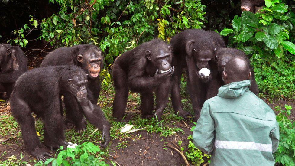 Chimp and caretaker