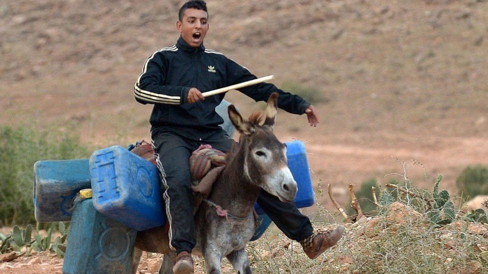 A a young man carries on a donkey empty barrels into Algeria to fill with oil and smuggle back into Morocco on September 12, 2013, along the Moroccan-Algerian border