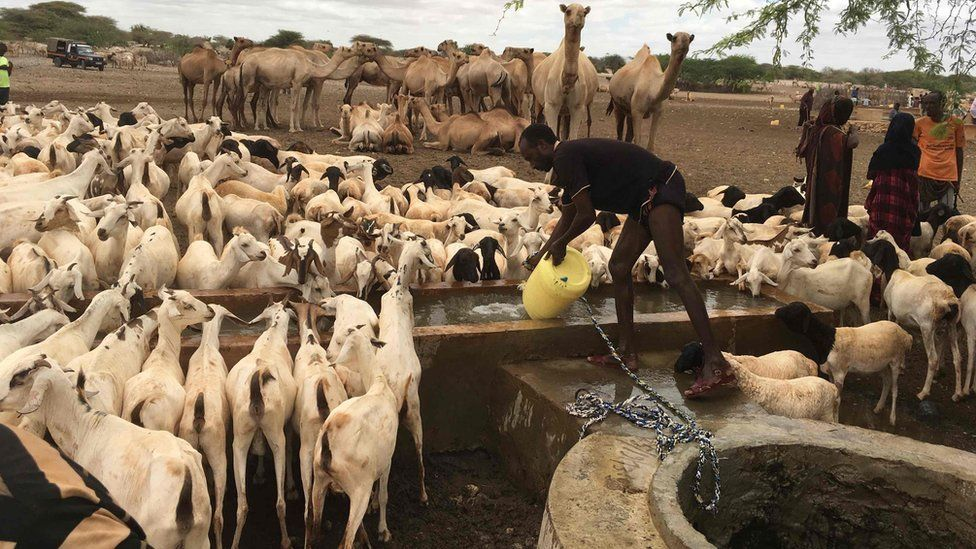 A herder draws water for his cattle