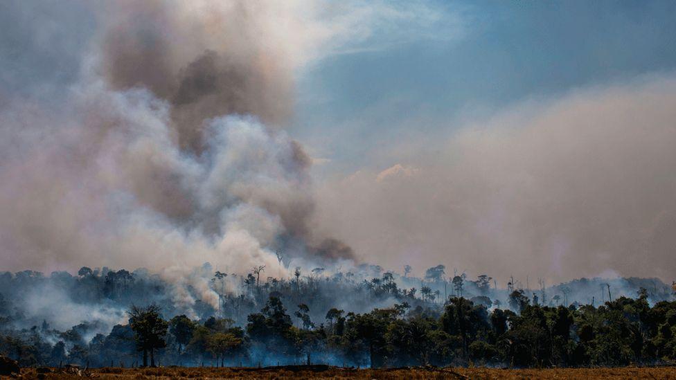 Número de incêndios florestais no mundo em 2019 é um recorde?