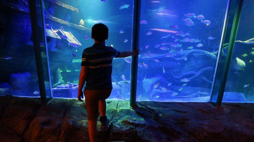 A young boy admires the bewitching underwater view
