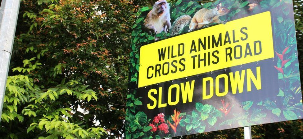 A roadsign warning drivers that wildlife may cross the road