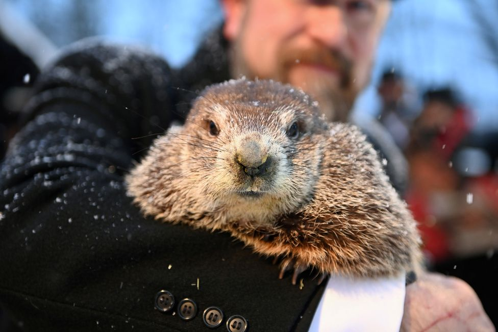 A groundhog, Punxsutawney Phil, during a socially distanced and remote event at Gobbler's Knob in Punxsutawney, Pennsylvania, on 2 February 2021