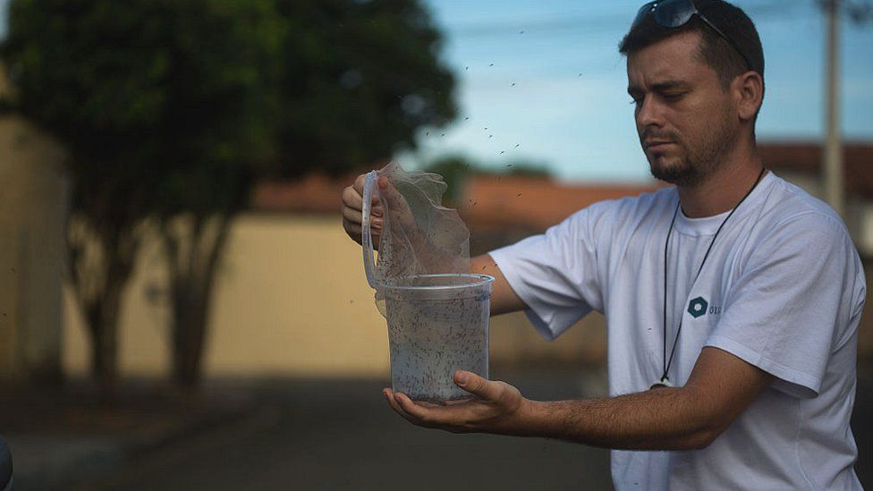 A biologist in Brazil releases Oxitec to combat a Zika outbreak
