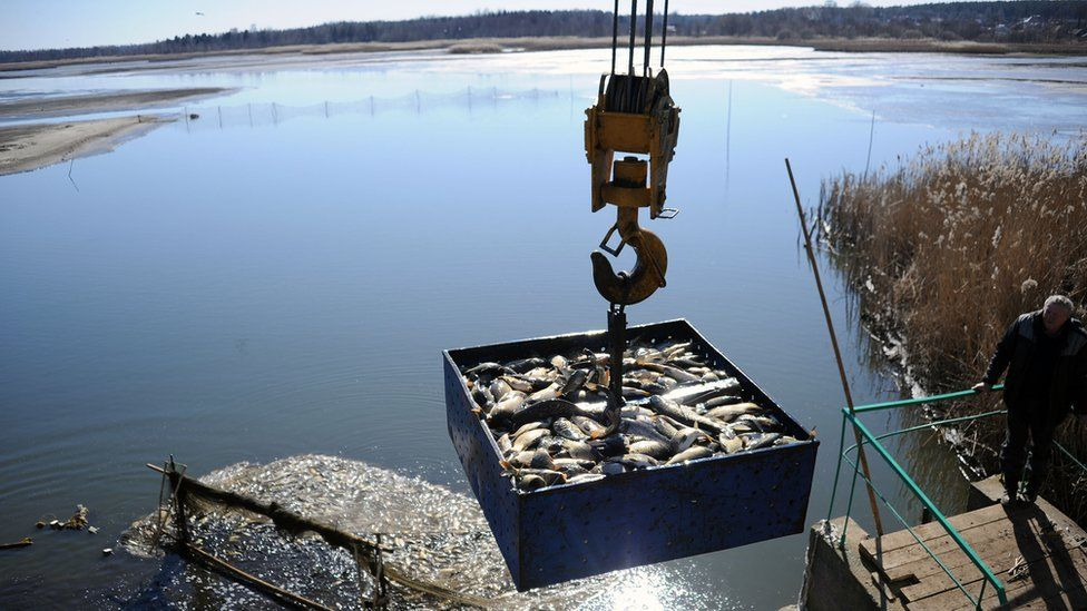 Carp being lifted out of an artificial lake, Belarus (Image: FAO/Sergei Gapon)