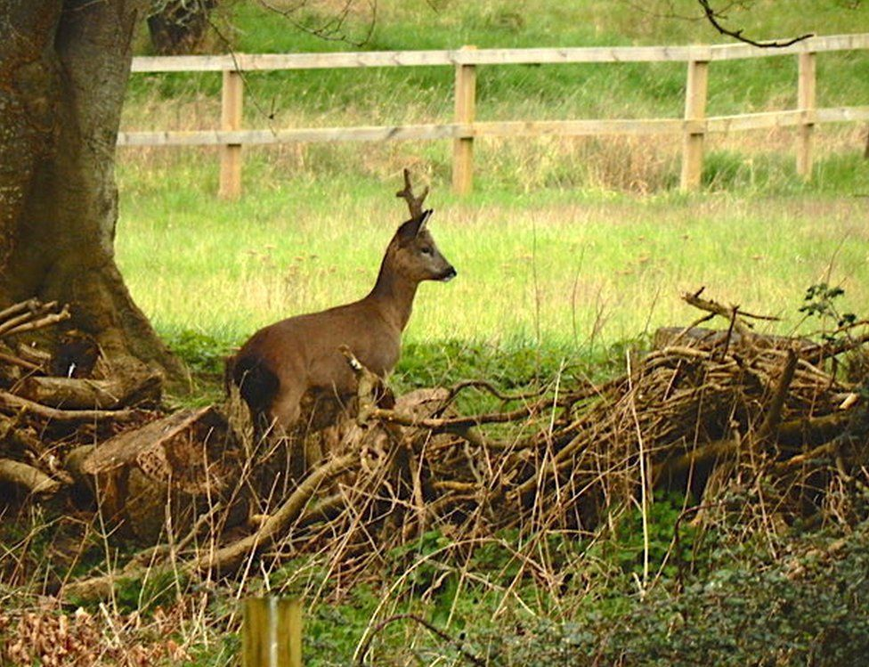 A small deer under a tree