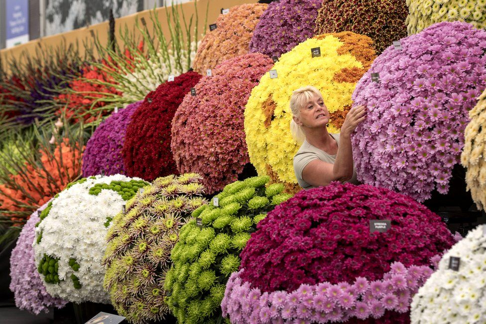 """A worker adjusts a floral display as preparations continue for this year""""s RHS Chelsea Flower Show at the Royal Hospital Chelsea, London"""