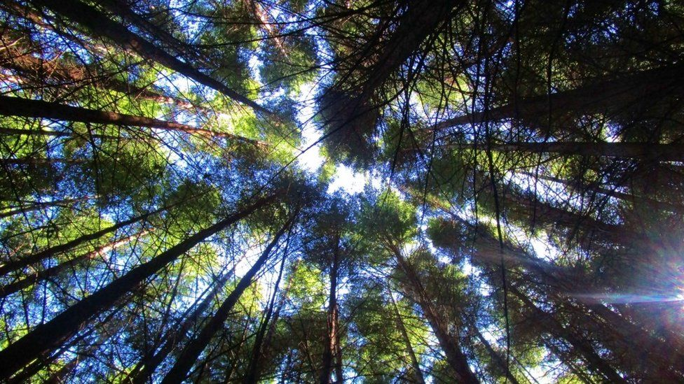 Looking up at the trees