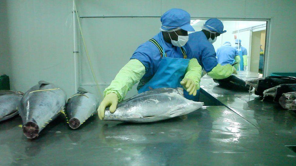 Kiribati Fish Limited