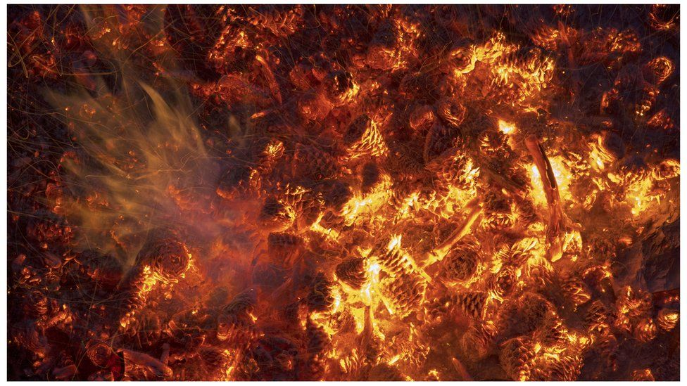 Pine cones burning in a forest fire