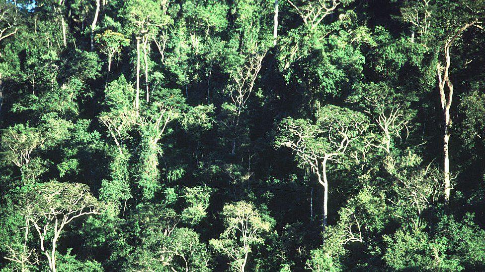 Brazil's Atlantic Forest