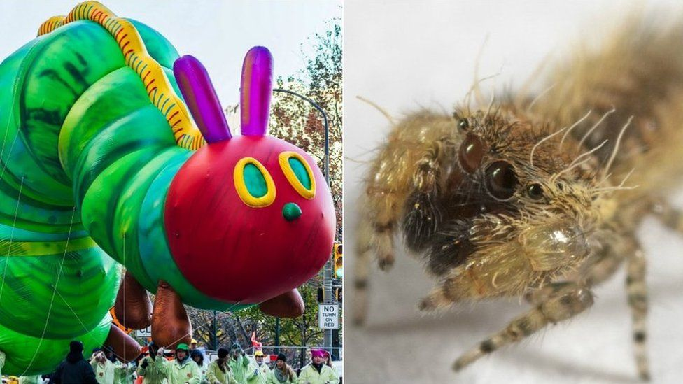 Spider named after The Very Hungry Caterpillar author Eric Carle