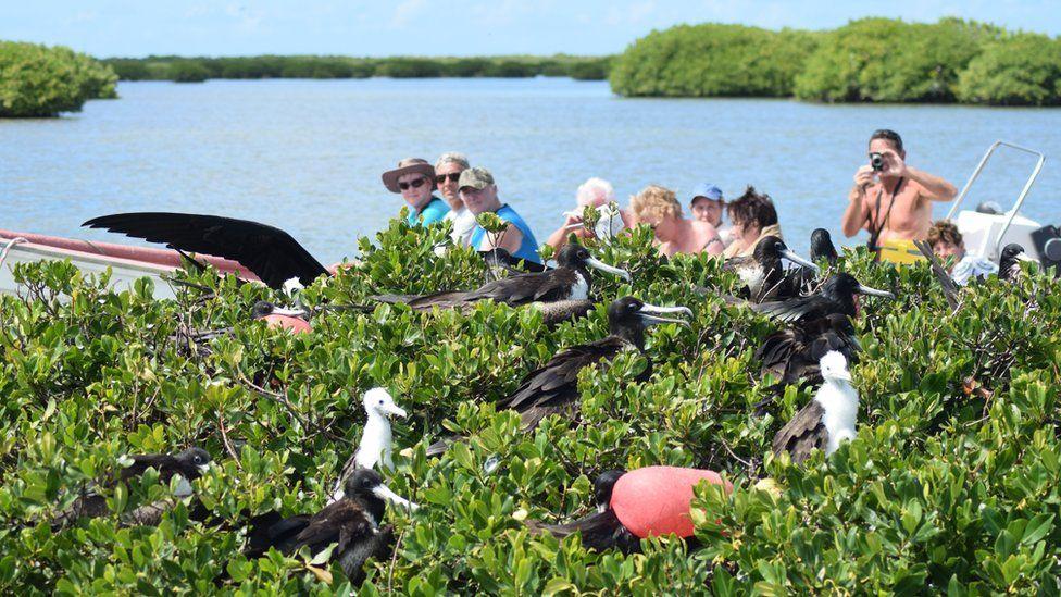 Tourists photograph frigatebirds in Codrington Lagoon