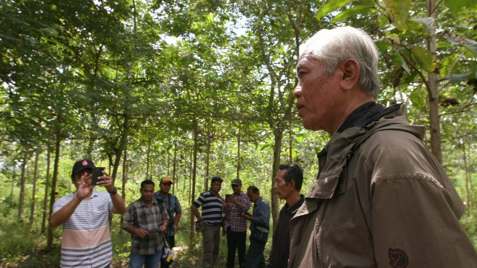 An old man, a survivor of the killings, in a teak forest, with several local intelligence officials, all men, observing from a distance, with one taking pictures with his phone.