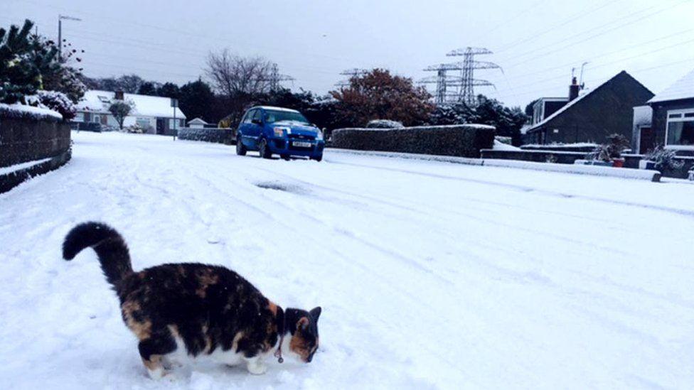 Cat in snow in Aberdeen