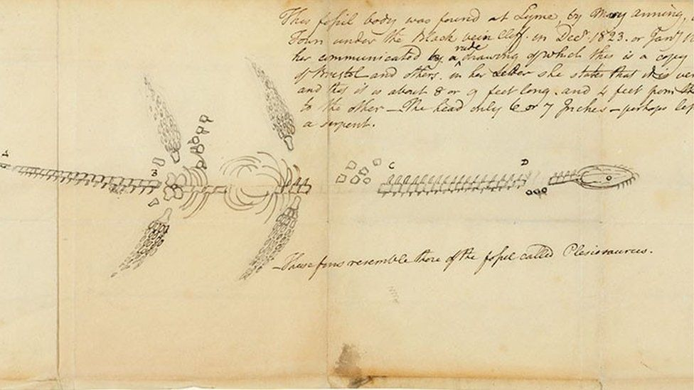 Mary Anning's sketch of her first plesiosaur