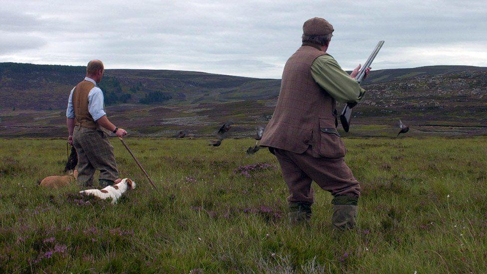 A shoot on a grouse moor