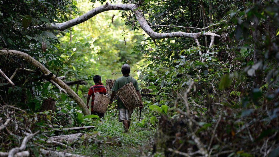 Коренные жители джамамади идут по лесу с большими соломенными корзинами на спине.