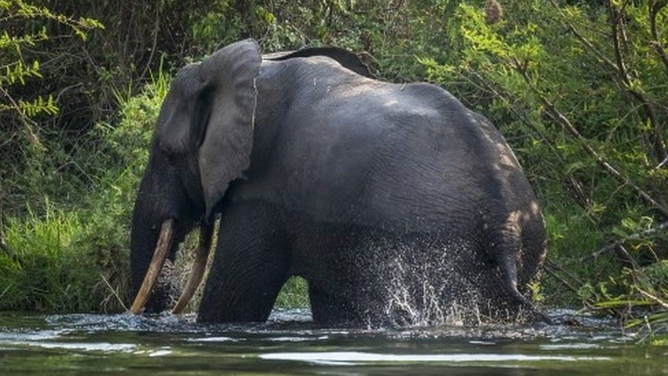 A bull elephant bathes on the Northern shores of Lake Edward inside Virunga National Park, in Ishango, DR Congo (09 August 2013)