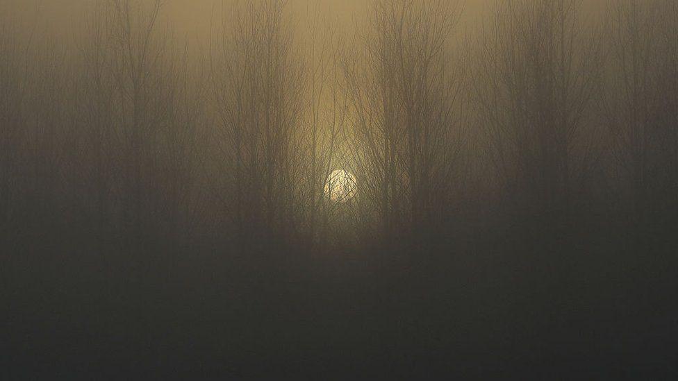 The sun sets behind a wood shrouded in fog