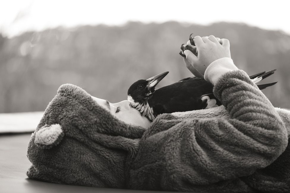 Penguin having a cuddle