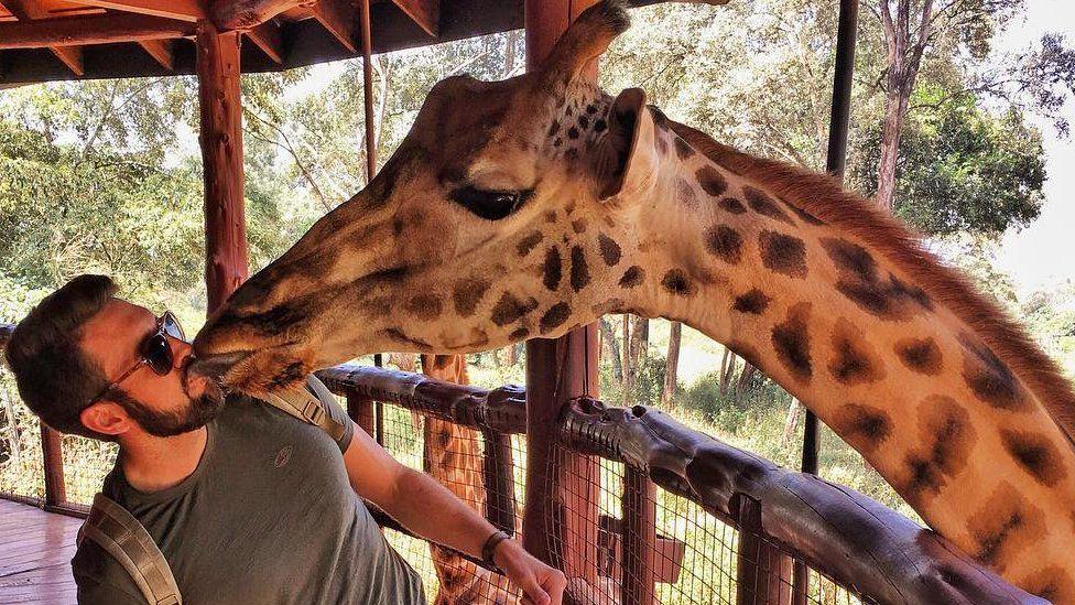 A giraffe licks Triphackr founder Clint Johnston