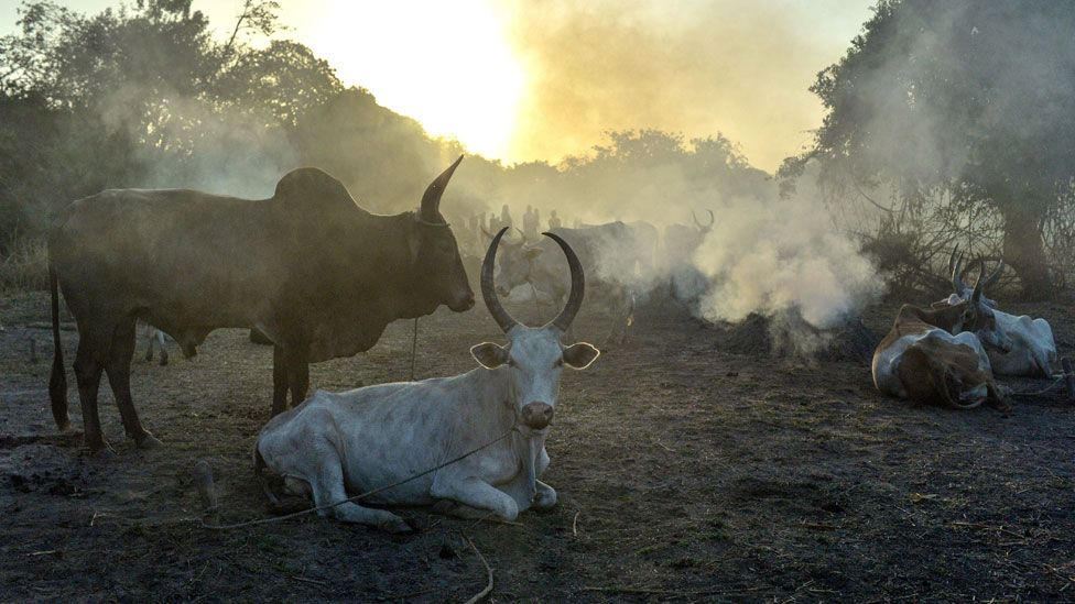 A group of cows surrounded by mist