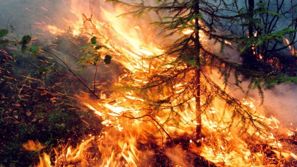 Wildfire burns in Krasnoyarsk region, Russia. Photo: 1 August 2019