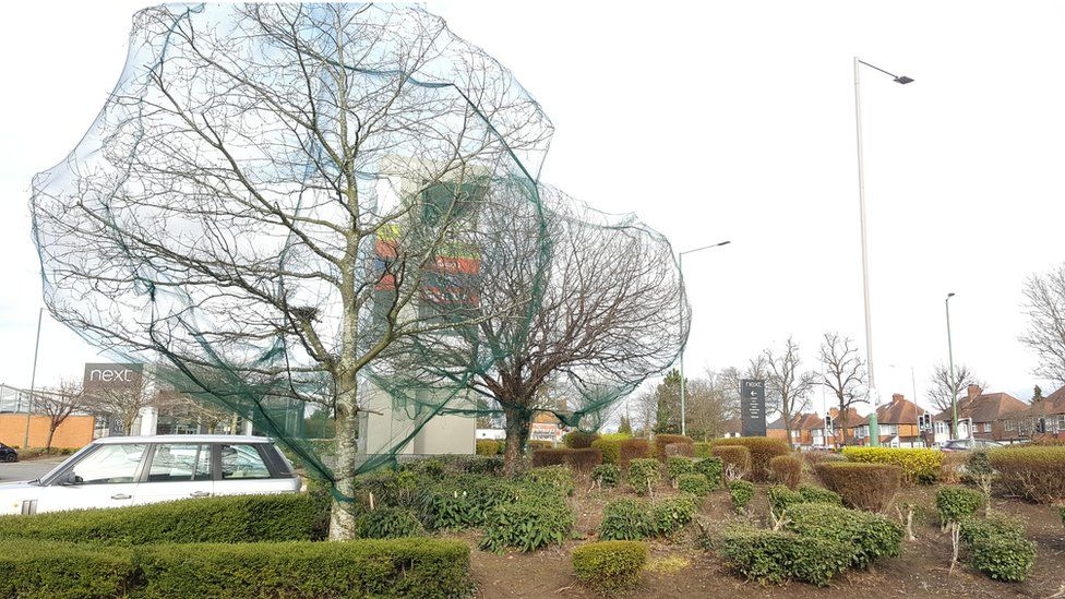 Tree netting at a retail park in Solihull