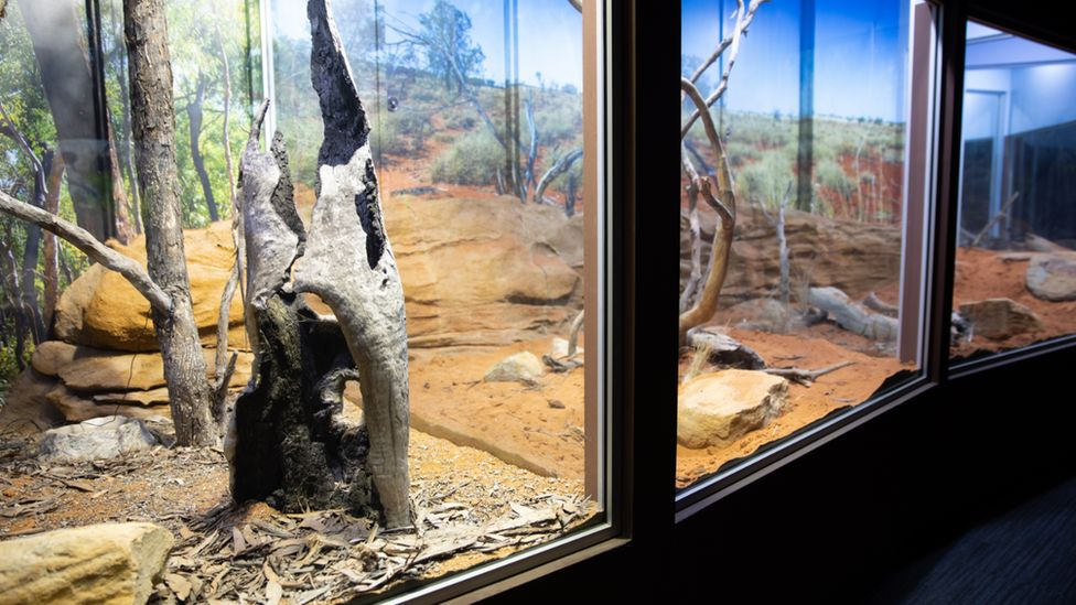 The reptile room in the Sydney Zoo