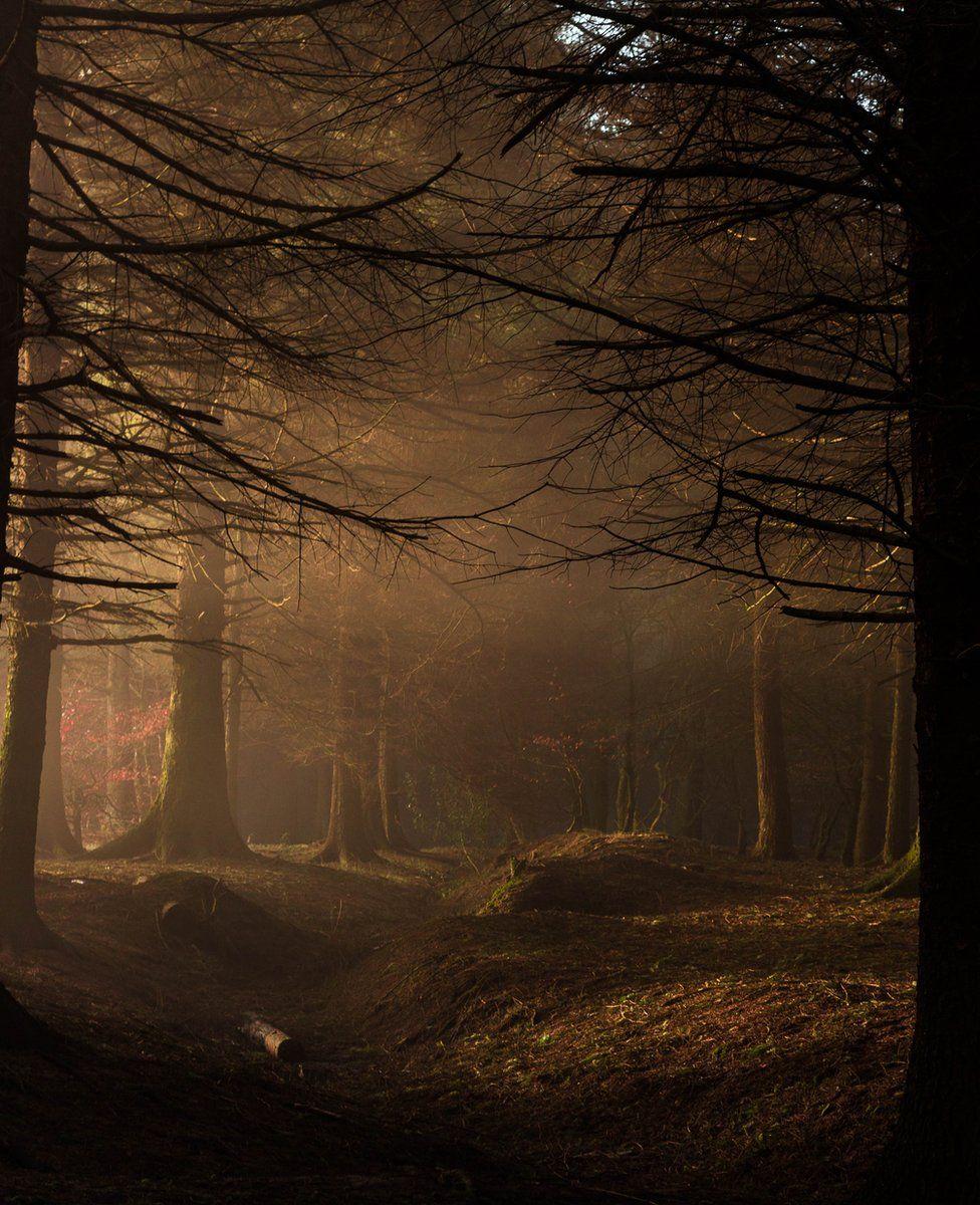 Fog lifting through trees