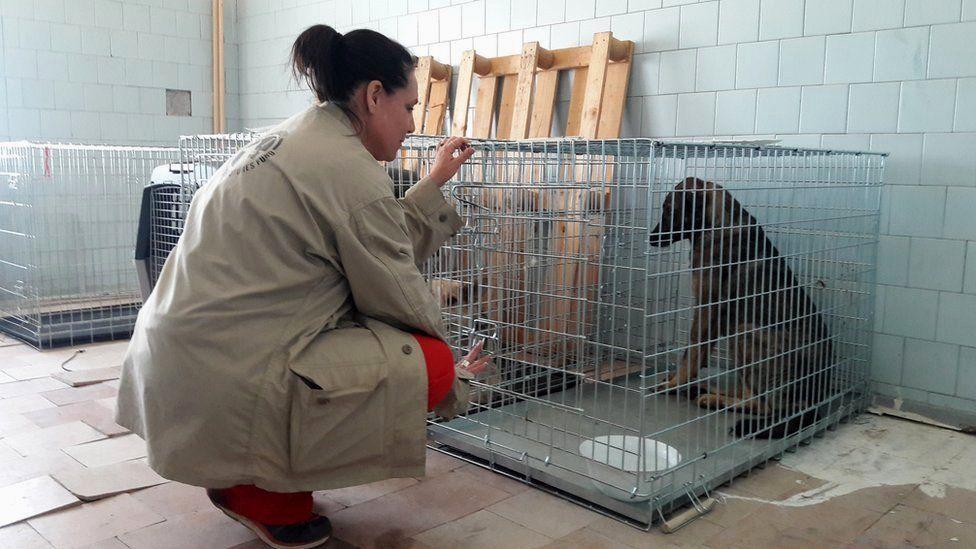 Волонтерка з собакою в клітці