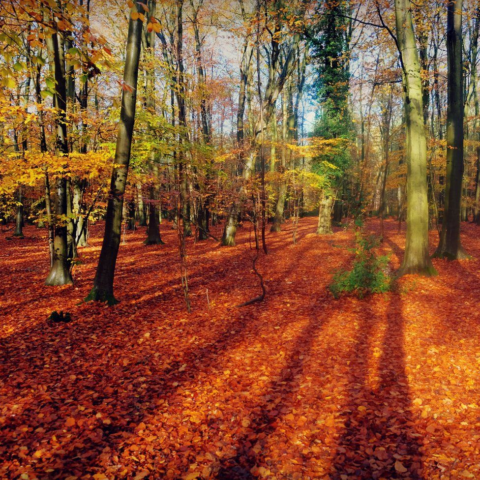 Leaves on the ground at Thorpe Forest near Thetford in Norfolk
