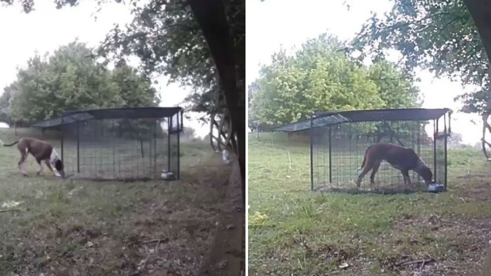 Rio the dog with cage trap