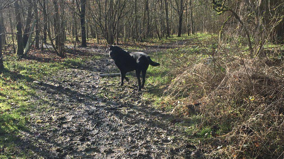 Bailey walking in the woods