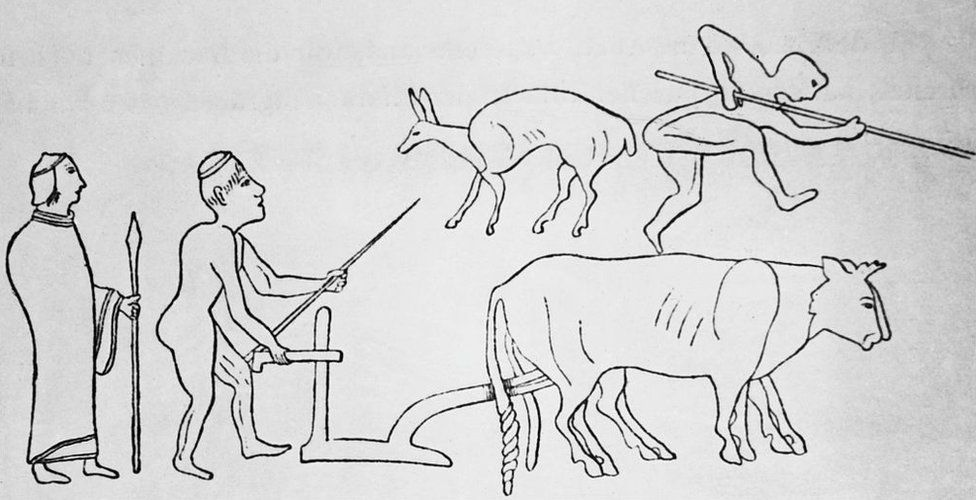 A depiction of ancient Greek farmers using a scratch plough, drawn by a pair of oxen, circa 400 BC