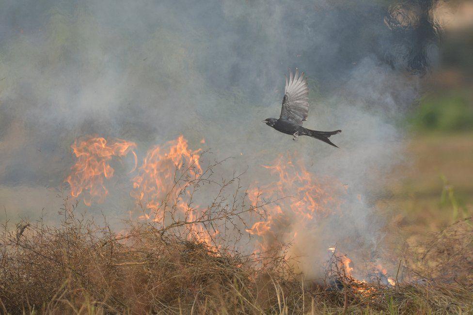 A bird flies above a bush fire