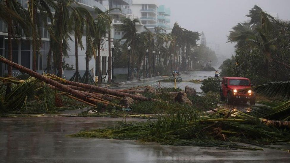 A vehicle passes downed palm trees in Miami, Florida. Photo: 10 September 2017