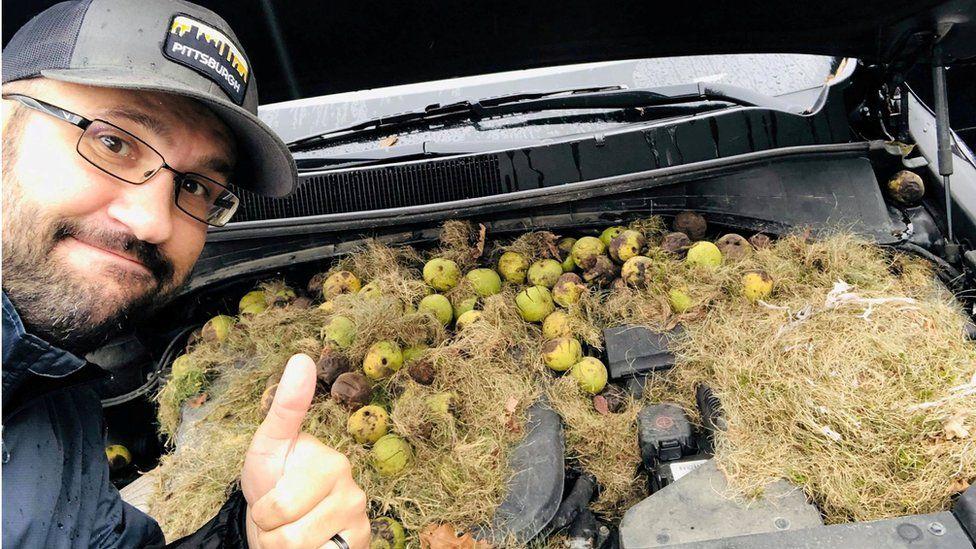Huge stash of walnuts squirreled away under car bonnet in US